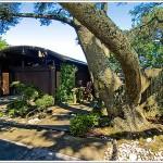 176 Palo Alto Avenue: A Meditative Charles Warren Callister Design