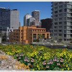 399 Fremont: April Showers (And Site Prep) Will Bring...Wildflowers