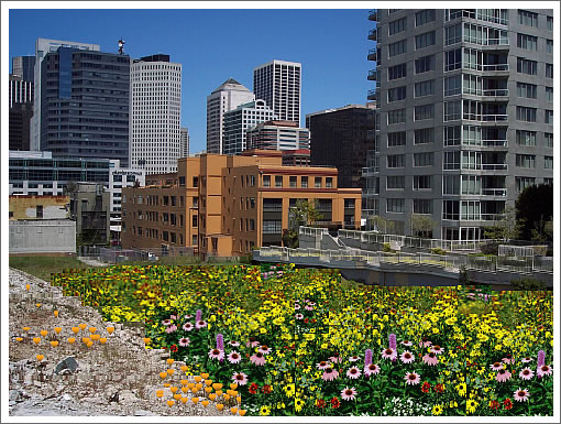 399 Fremont: April Showers (And Site Prep) Will Bring…Wildflowers