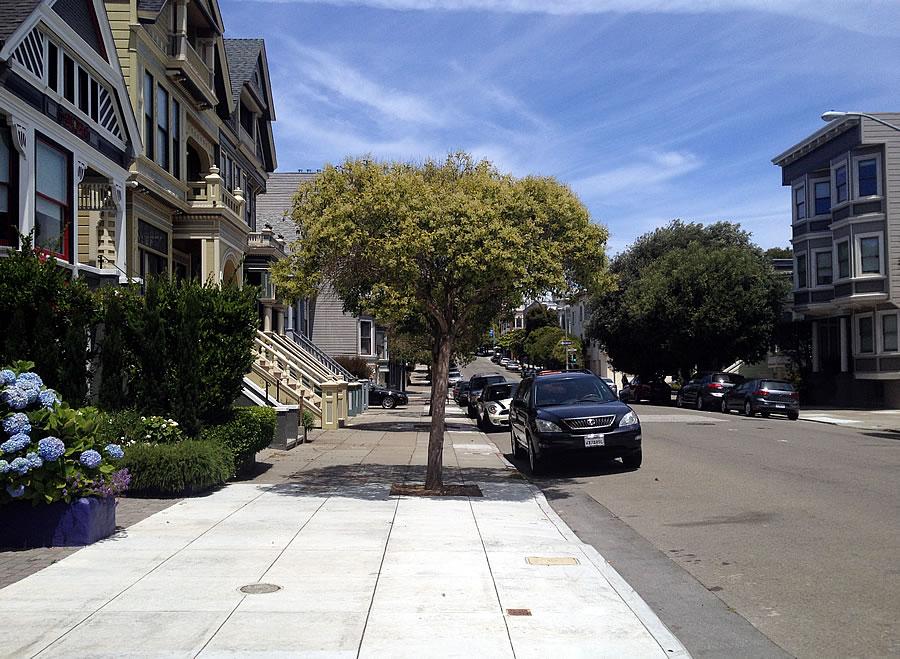 Street Tree via SocketSite.com